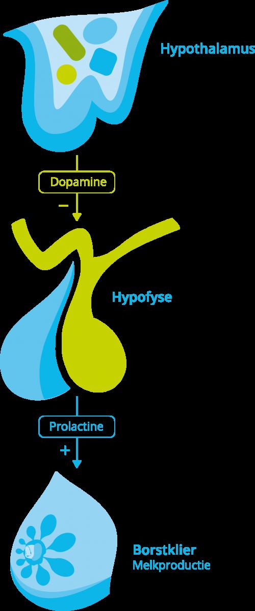 Hormoonas prolactine